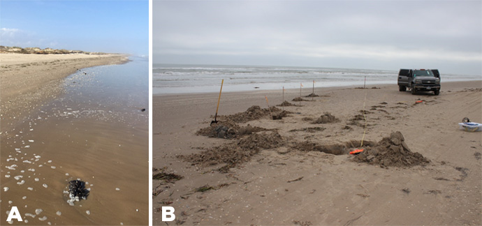 "Figure 2. Boca Chica Shipwreck No. 1 in December of 2017: (a) facing northwest with the sternpost in the foreground; (b) view from the ""bow"" to the sternpost showing the baseline tape and positions of some of the frames exposed through excavation."