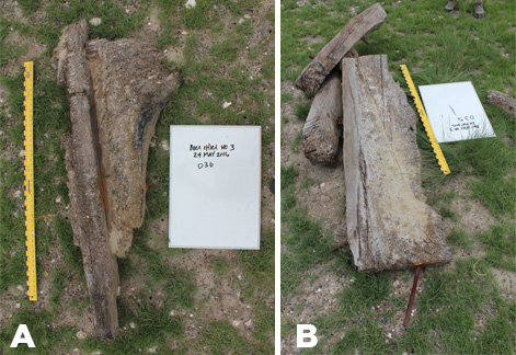 Figure 4. Shipwreck features: (a) hanging knee with possible deck beam; (b) lodging knees.