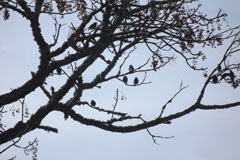 Birds on tree branches