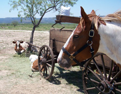 Horses and a wagon