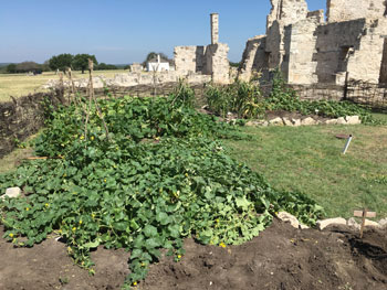 The soil used in the modern garden was excavated from the riverbed and brought up to the site.  With the topsoil at the Fort being only about 3-4 inches deep, more fertile soil needed to be used.  Pictured here are cantaloupe, squash, pumpkin, corn, and gourd plants.