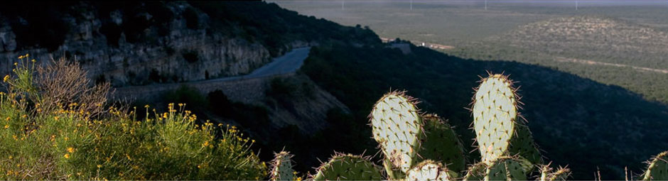 West Texas vista with cactus