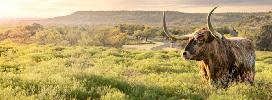 Experience the Official State of Texas Longhorn Herd