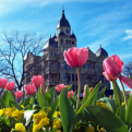 Restored Denton County Courthouse with tulips.