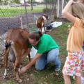 Children watch a goat milking demonstration.