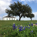Photo of bluebonnets at Fort McKavett State Historic Site
