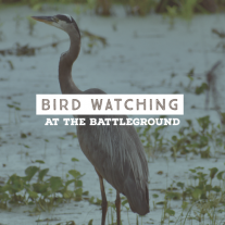 heron standing on the edge of a marsh - text say Birdwatching at the Battleground