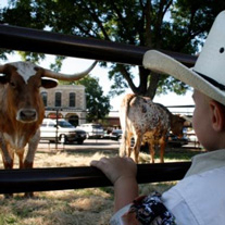 Young boy and longhorn
