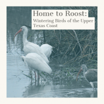 group of birds stand on the shore of a marsh - text says Home to Roost: Wintering Birds of the Upper Texas Coast