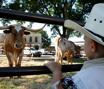 A little boy checks out the longhorns.